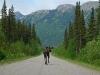 Elch, Yukon-Territorium - Kanada
